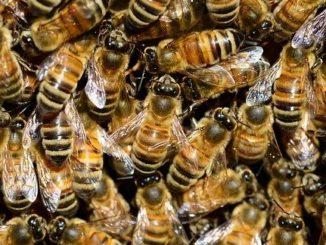 пчеловодство и пестициды