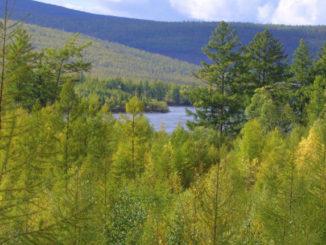 управление лесами