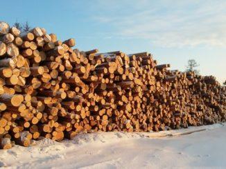 оборот древесины