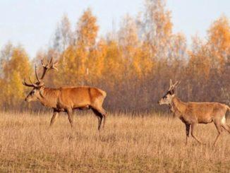 охотничьего хозяйства