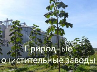 Природные очистительные заводы