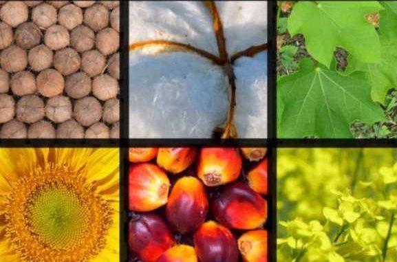 больше, чем биомасса Земли