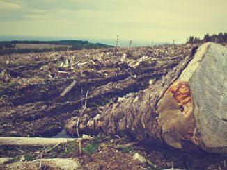 Цифровая модернизация лесной отрасли