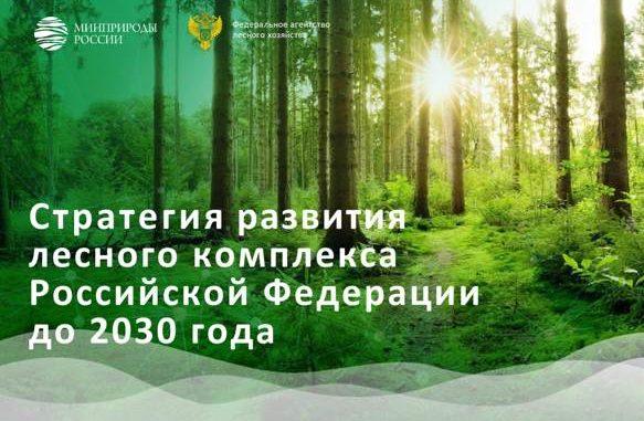 О Стратегии развития лесного комплекса
