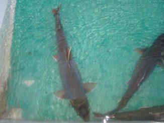 Новое в аквакультуре