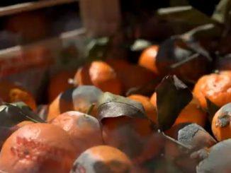 Сокращение продовольственных потерь