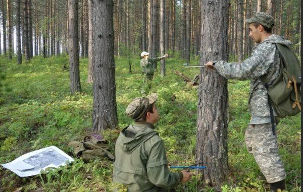 система лесоустройства