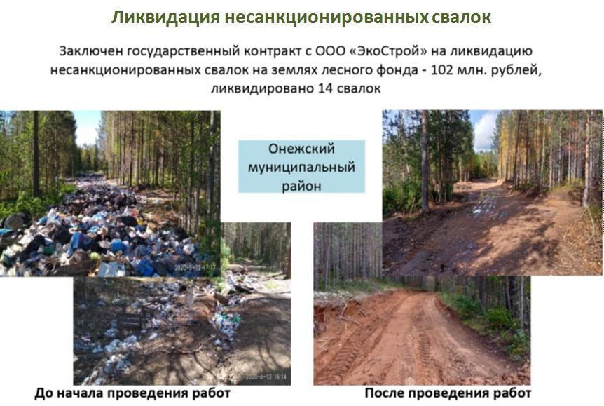 Леса Архангельской области