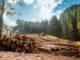 Об использовании лесов