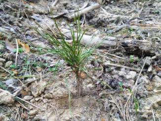 Бизнес восстанавливает леса