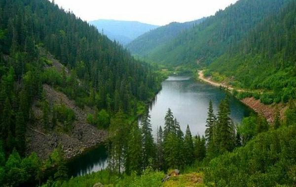 Cjcnjzybt лесопромышленного комплекса