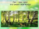 доклад по лесной тематике