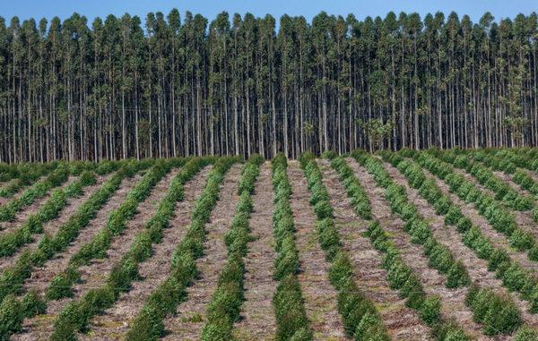 Площадь лесовосстановления 220 тыс. га