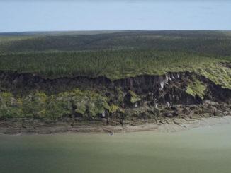 Проект Плейстоценового парка